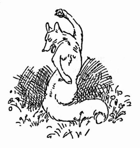 cartoon of fox