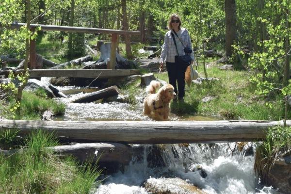 dog in river